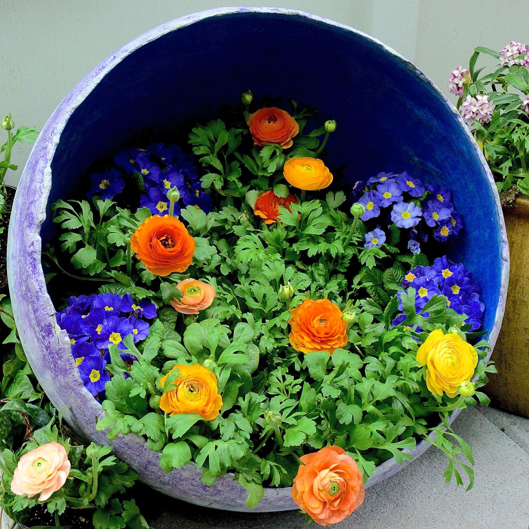 Симпатичная цветочная композиция с оранжевыми ранункулюсами