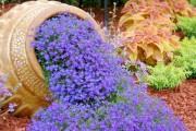 Фото 10 Вербена (51 фото): неприхотливая красота для вашего сада