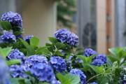 Фото 20 Вербена (51 фото): неприхотливая красота для вашего сада