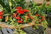 Фото 19 Замиокулькас (33 фото): посадка, выращивание, уход в домашних условиях