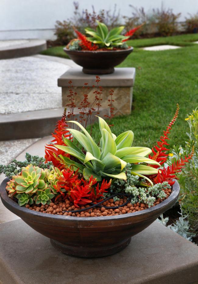 """Яркая красная толстянка Crassula campfire может стать """"гвоздем программы"""" в вашем садовом декоре"""