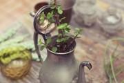 Фото 14 Денежное дерево (60 фото): как получить красивое и здоровое растение?
