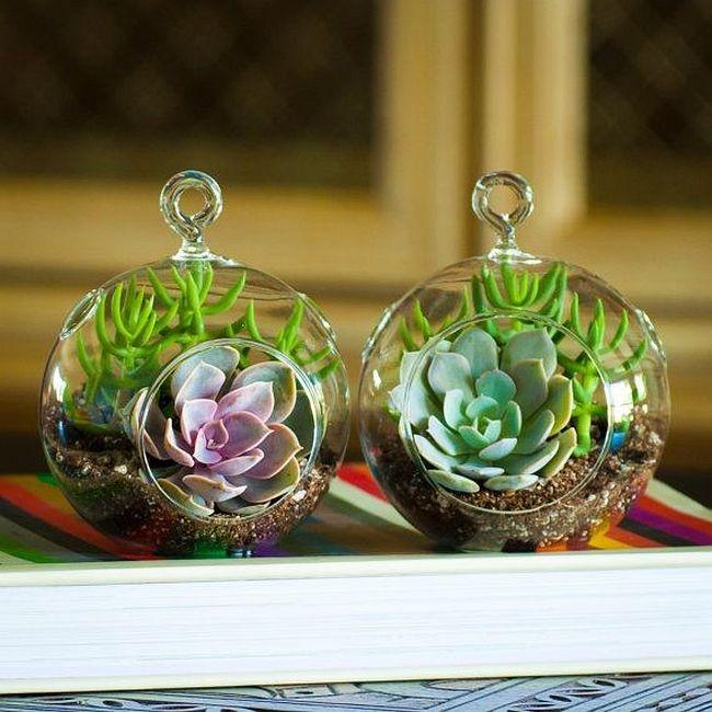Маленькие подвесные флорариумы с эхеверией и миниатюрным денежным деревом