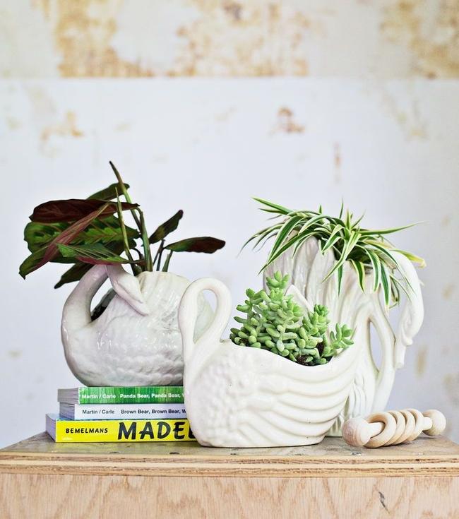 Крупные листья маранты выглядят роскошно и выразительно и украсят любой интерьер