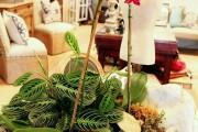 Фото 21 Маранта (48 фото): правила выращивания и ухода за «молитвенным растением»