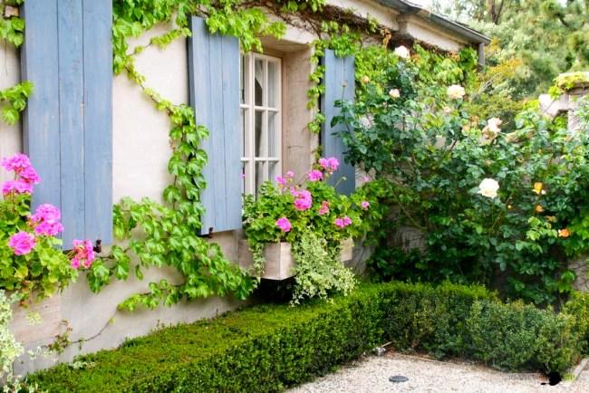 В композициях для украшения фасада дома с плющом лучше всего сочетается ампельная пеларгония (плющелистная, щитовидная)