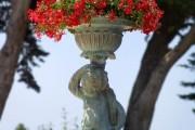 Фото 9 Королевская герань или пеларгония (45 фото): аристократка в пышных нарядах