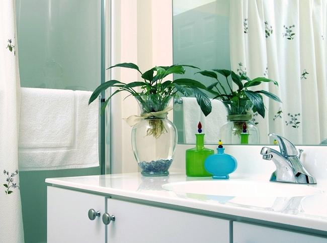 Спатифиллум - одно из немногих растений, подходящих для содержания в ванных комнатах. Но не следует забывать о достаточном освещении.