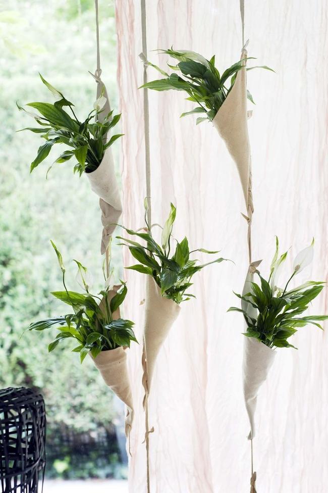 Спатифиллумы могут использоваться для декора помещений в свадебной флористике