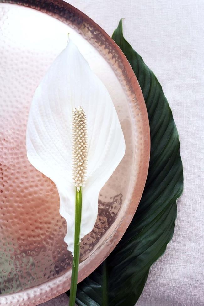 Красота спатифиллума, подчеркнутая фоном из предметов домашнего декора цвета розового золота