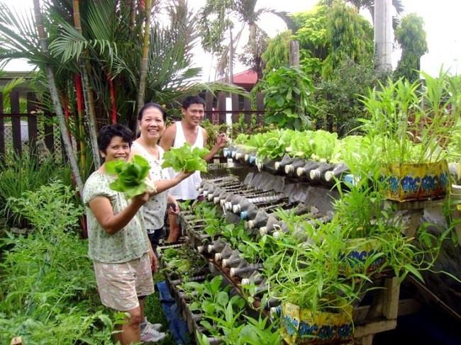 Обустройство на даче компактного размещения рассады или мелких растений