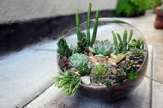 Стеклянная емкость – временное пристанище для растений. Суккуленты в стеклянной вазе когда-нибудь будут нуждать в болеепросторном доме