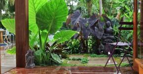 Алоказия (54 фото): экзотическое великолепие в каждом листе фото