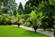 Фото 13 Алоказия (54 фото): экзотическое великолепие в каждом листе