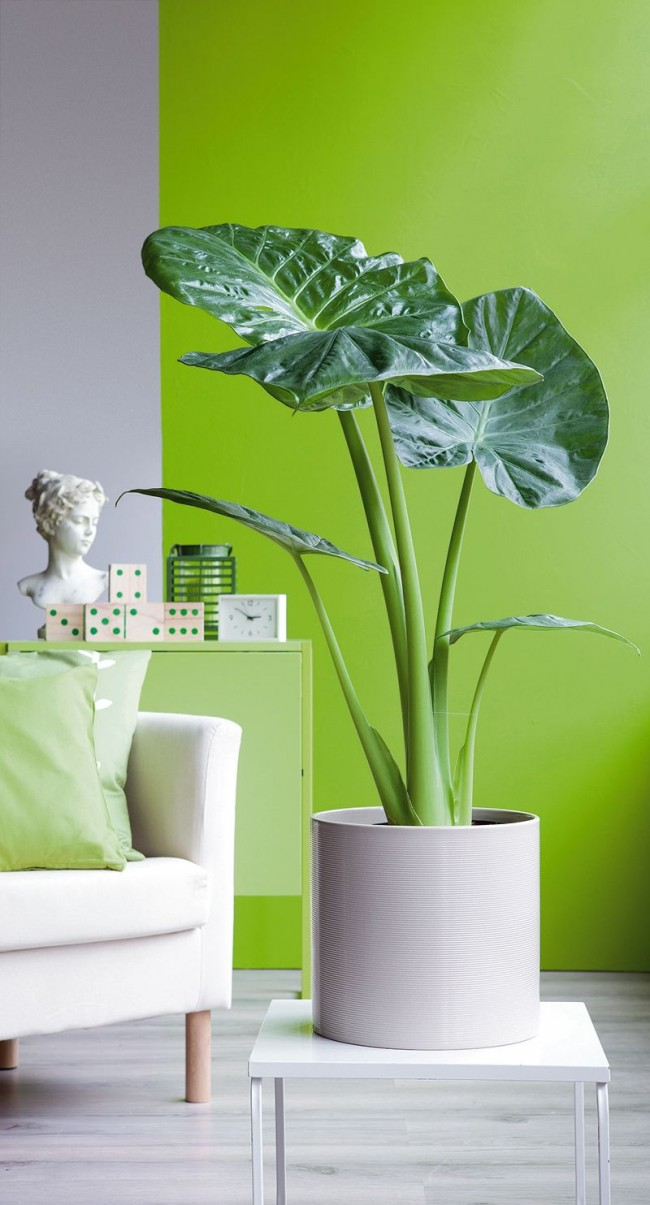 Чтобы растение не переставало радовать своей красотой, не следует забывать и об подкормке
