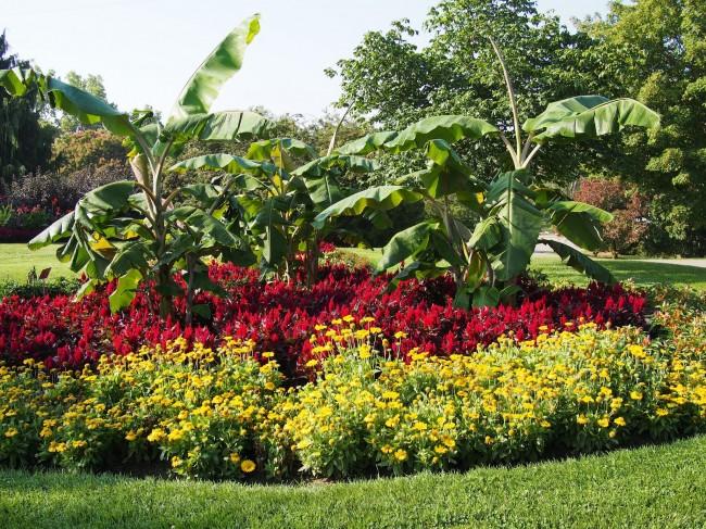 Для хорошего роста и цветения целозии требуется регулярный полив и периодическое удобрение