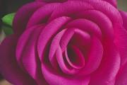 Фото 9 Цветы из гофрированной бумаги своими руками: лучшие мастер-классы и советы по декору