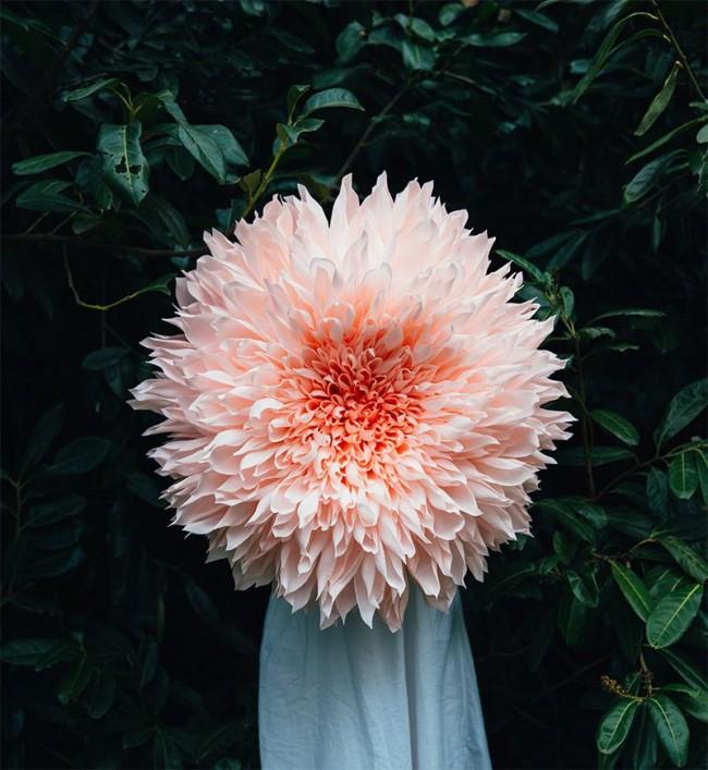 Огромная хризантема из гофробумаги - красиво и эффектно
