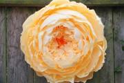 Фото 20 Цветы из гофрированной бумаги своими руками: лучшие мастер-классы и советы по декору