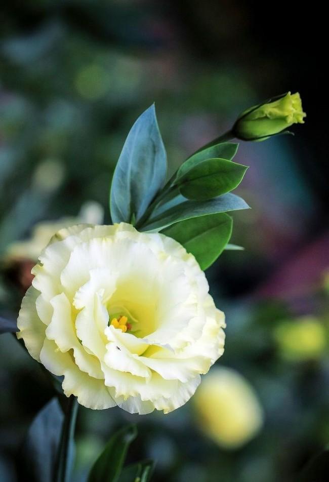 Почва для этого нежного капризного цветка должна быть специально подготовленной