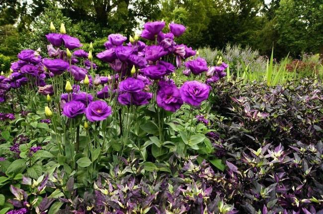 Этот красивый и гордый цветок умело противостоит вредителям, но иногда ему все-таки нужна помощь