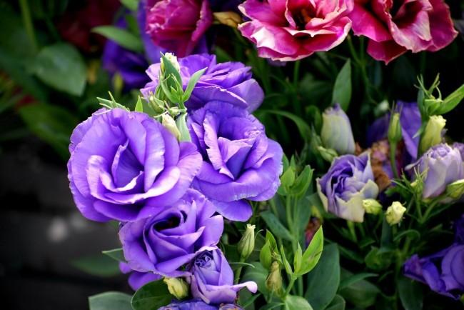 Красота и нежность в вашем саду