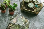 Фото 9 Флорариум своими руками: пошаговый мастер-класс по созданию потрясающего мини-сада за стеклом