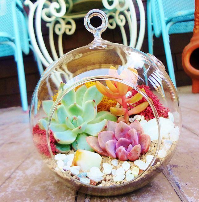 Живое чудо за стеклом - флорариум