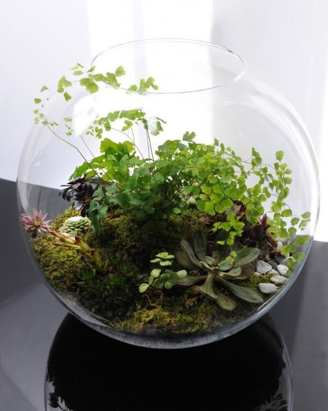 Кусочек леса во флорариуме