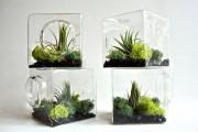 Фото 16 Флорариум своими руками: пошаговый мастер-класс по созданию потрясающего мини-сада за стеклом