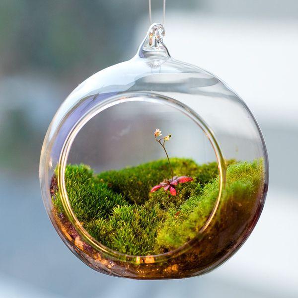 Кусочек мшистого леса в стеклянном шарике