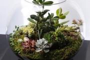 Фото 19 Флорариум своими руками: пошаговый мастер-класс по созданию потрясающего мини-сада за стеклом