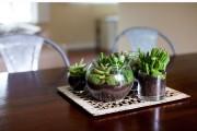 Фото 20 Флорариум своими руками: пошаговый мастер-класс по созданию потрясающего мини-сада за стеклом