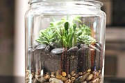 Фото 21 Флорариум своими руками: пошаговый мастер-класс по созданию потрясающего мини-сада за стеклом