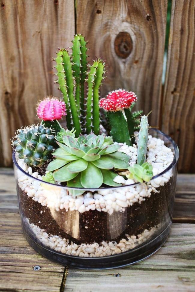 Украшать террариум для кактусов можно всем, что подсказывает ваша фантазия