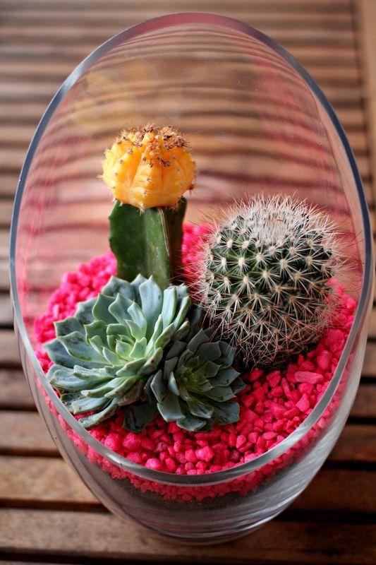 Пустыня в миниатюре отлично приживется в городской квартире