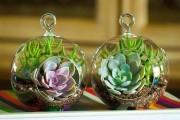 Фото 25 Флорариум своими руками: пошаговый мастер-класс по созданию потрясающего мини-сада за стеклом