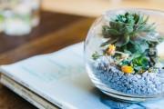 Фото 26 Флорариум своими руками: пошаговый мастер-класс по созданию потрясающего мини-сада за стеклом