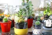 Фото 27 Флорариум своими руками: пошаговый мастер-класс по созданию потрясающего мини-сада за стеклом