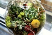 Фото 28 Флорариум своими руками: пошаговый мастер-класс по созданию потрясающего мини-сада за стеклом