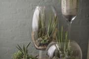 Фото 29 Флорариум своими руками: пошаговый мастер-класс по созданию потрясающего мини-сада за стеклом