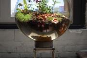 Фото 30 Флорариум своими руками: пошаговый мастер-класс по созданию потрясающего мини-сада за стеклом