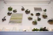 Фото 31 Флорариум своими руками: пошаговый мастер-класс по созданию потрясающего мини-сада за стеклом