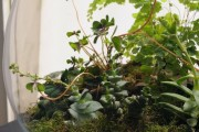 Фото 32 Флорариум своими руками: пошаговый мастер-класс по созданию потрясающего мини-сада за стеклом