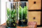 Фото 34 Флорариум своими руками: пошаговый мастер-класс по созданию потрясающего мини-сада за стеклом