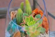 Фото 35 Флорариум своими руками: пошаговый мастер-класс по созданию потрясающего мини-сада за стеклом