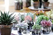 Фото 40 Флорариум своими руками: пошаговый мастер-класс по созданию потрясающего мини-сада за стеклом
