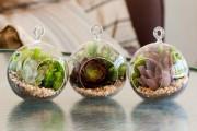 Фото 41 Флорариум своими руками: пошаговый мастер-класс по созданию потрясающего мини-сада за стеклом