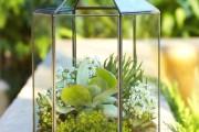 Фото 5 Флорариум своими руками: пошаговый мастер-класс по созданию потрясающего мини-сада за стеклом