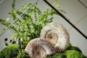 Фото 42 Флорариум своими руками: пошаговый мастер-класс по созданию потрясающего мини-сада за стеклом